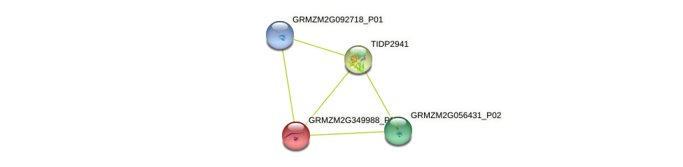 103642055 protein (Zea mays) - STRING interaction network