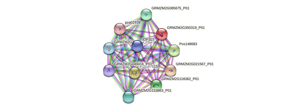 GRMZM2G350319_P01 protein (Zea mays) - STRING interaction network