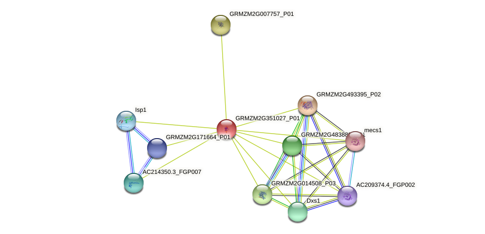 GRMZM2G351027_P01 protein (Zea mays) - STRING interaction network