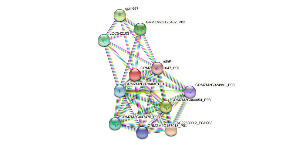 GRMZM2G351047_P01 protein (Zea mays) - STRING interaction network
