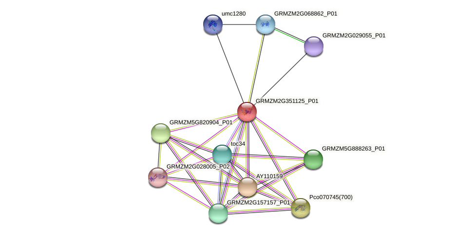 GRMZM2G351125_P01 protein (Zea mays) - STRING interaction network