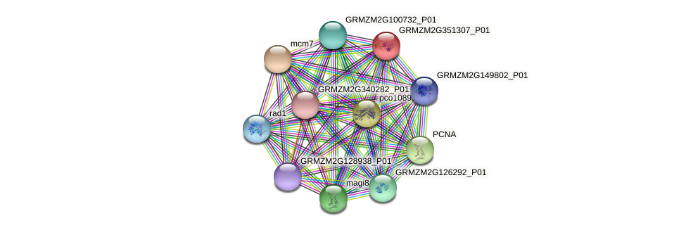 GRMZM2G351307_P01 protein (Zea mays) - STRING interaction network