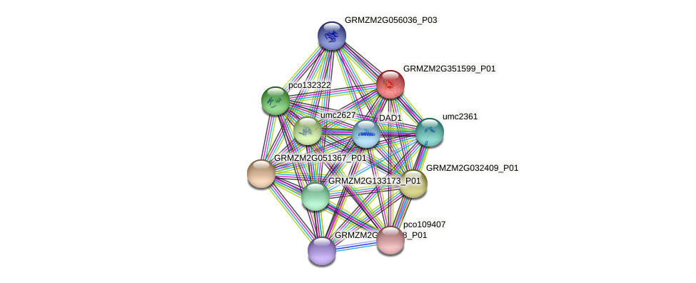 GRMZM2G351599_P01 protein (Zea mays) - STRING interaction network