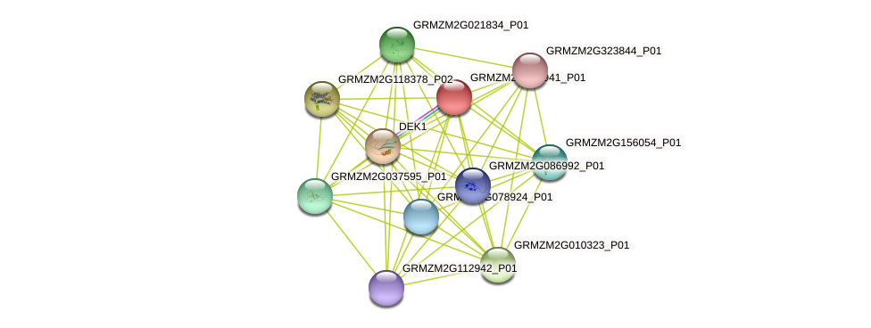 103635937 protein (Zea mays) - STRING interaction network