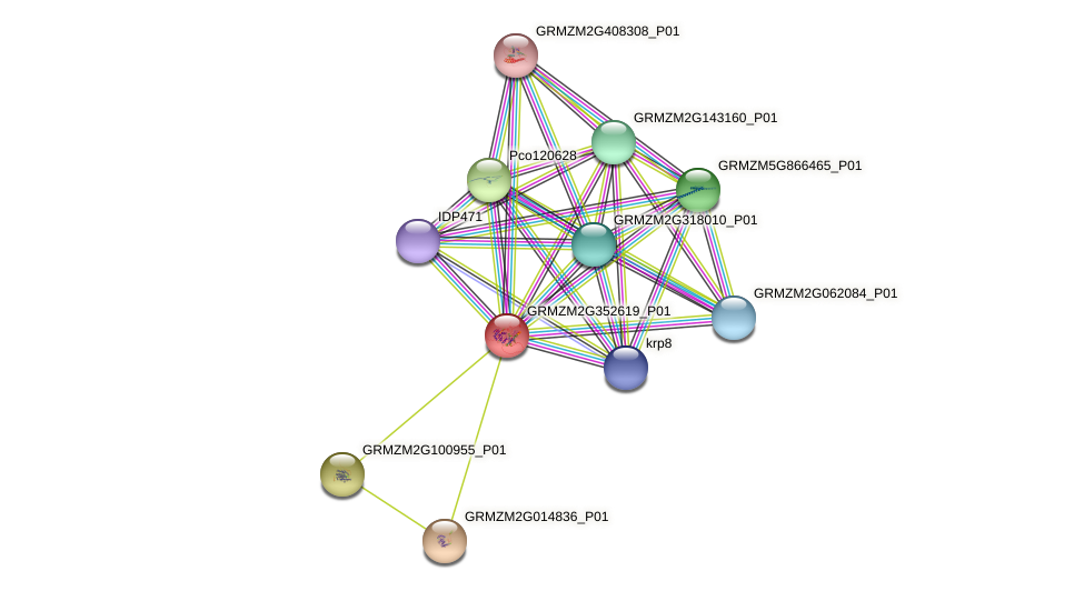 GRMZM2G352619_P01 protein (Zea mays) - STRING interaction network
