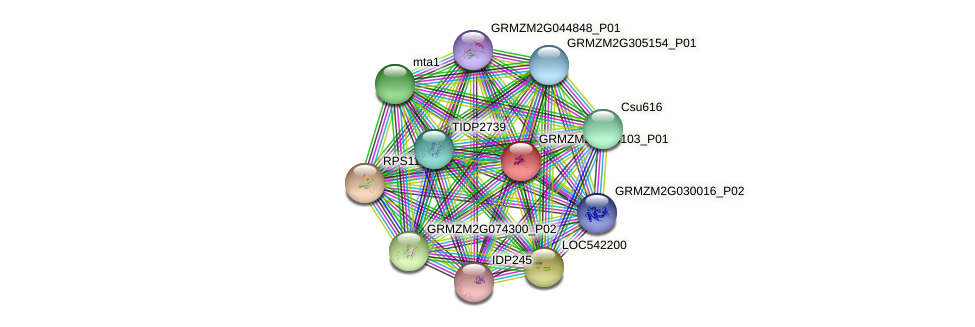 GRMZM2G353103_P01 protein (Zea mays) - STRING interaction network