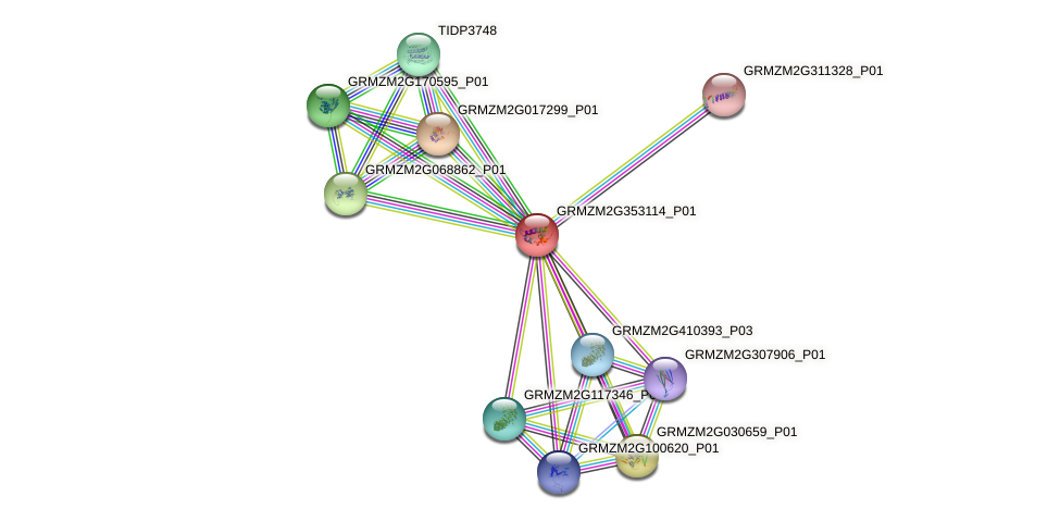 GRMZM2G353114_P01 protein (Zea mays) - STRING interaction network