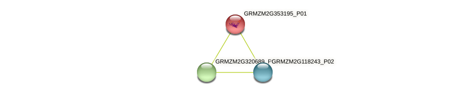 GRMZM2G353195_P01 protein (Zea mays) - STRING interaction network
