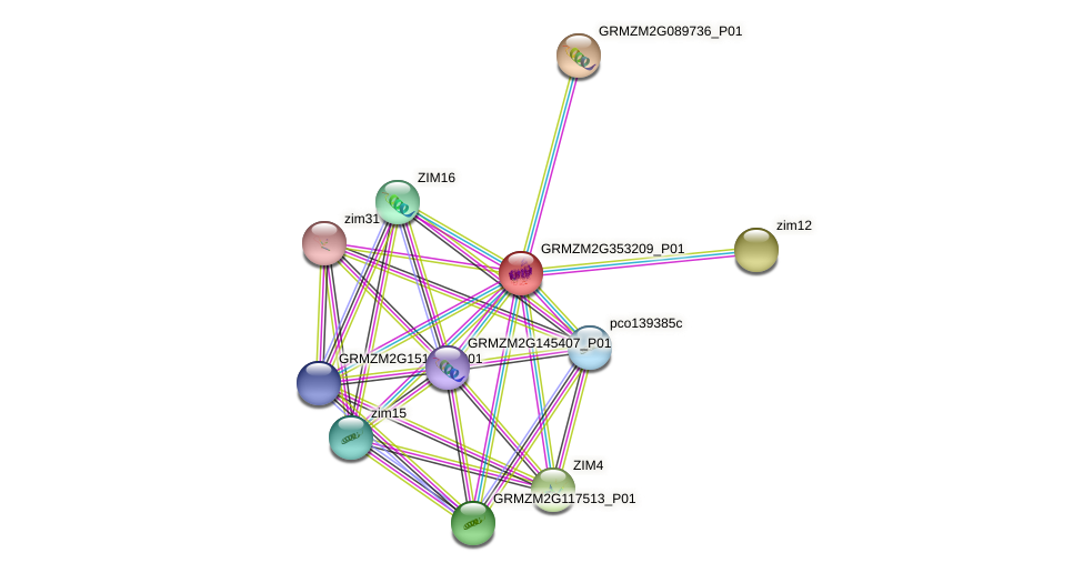 GRMZM2G353209_P01 protein (Zea mays) - STRING interaction network