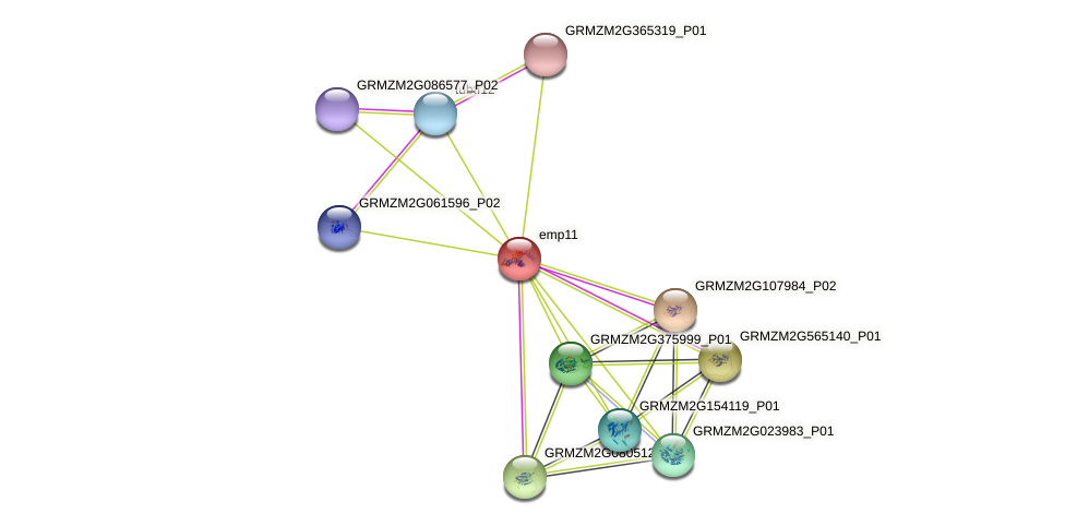 GRMZM2G353301_P01 protein (Zea mays) - STRING interaction network