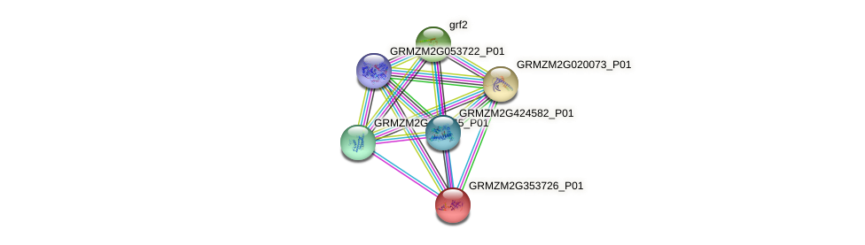 GRMZM2G353726_P01 protein (Zea mays) - STRING interaction network