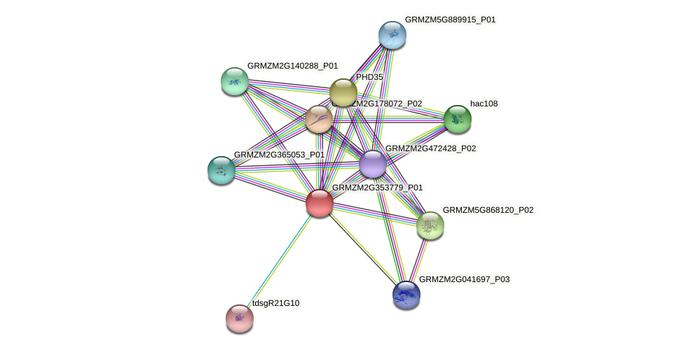 Zm.24728 protein (Zea mays) - STRING interaction network