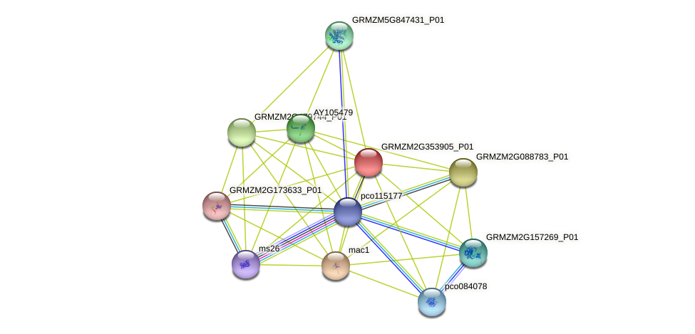 GRMZM2G353905_P01 protein (Zea mays) - STRING interaction network