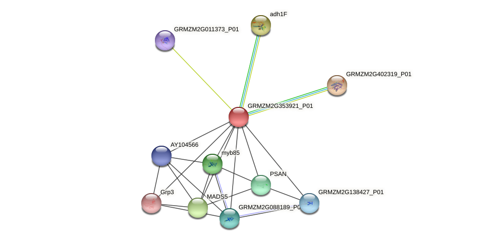 GRMZM2G353921_P01 protein (Zea mays) - STRING interaction network