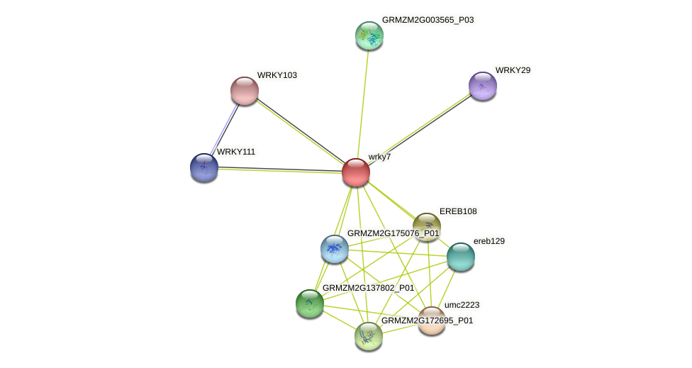wrky7 protein (Zea mays) - STRING interaction network