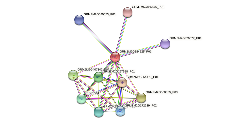 GRMZM2G354525_P01 protein (Zea mays) - STRING interaction network