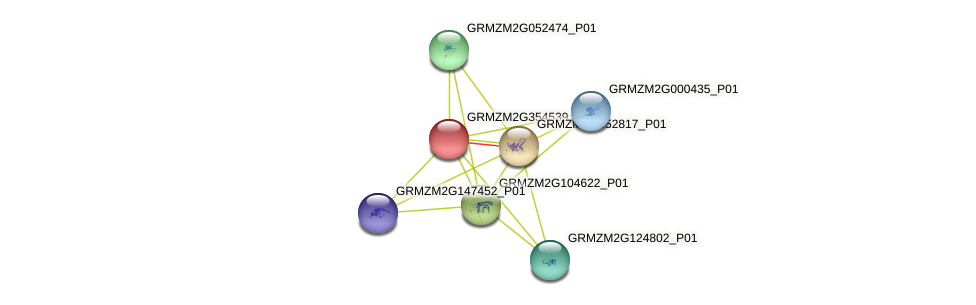GRMZM2G354539_P02 protein (Zea mays) - STRING interaction network
