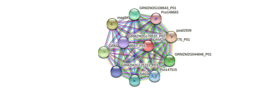 GRMZM2G354775_P01 protein (Zea mays) - STRING interaction network