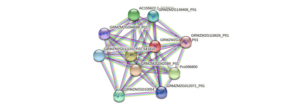 GRMZM2G355381_P01 protein (Zea mays) - STRING interaction network