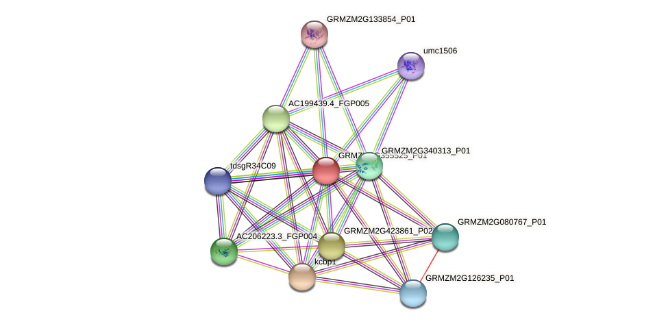 GRMZM2G355525_P01 protein (Zea mays) - STRING interaction network