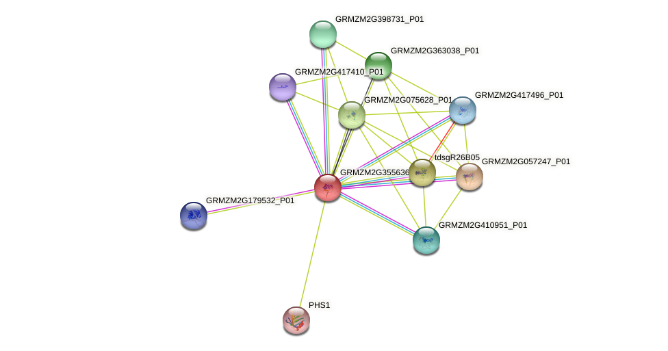 Zm.31959 protein (Zea mays) - STRING interaction network