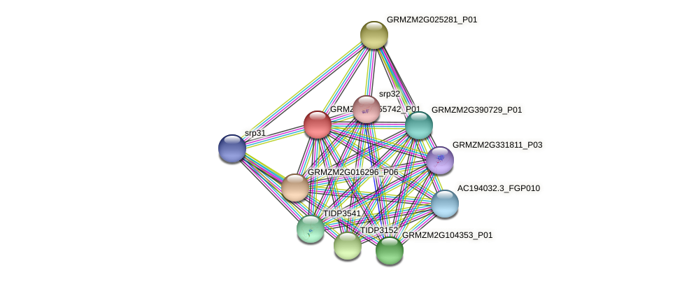 GRMZM2G355742_P01 protein (Zea mays) - STRING interaction network