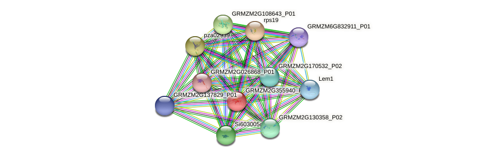 GRMZM2G355940_P01 protein (Zea mays) - STRING interaction network