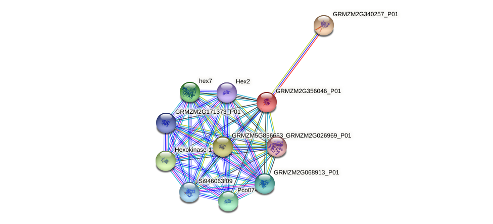 GRMZM2G356046_P01 protein (Zea mays) - STRING interaction network