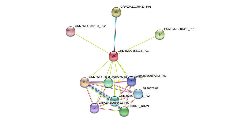 GRMZM2G356103_P01 protein (Zea mays) - STRING interaction network