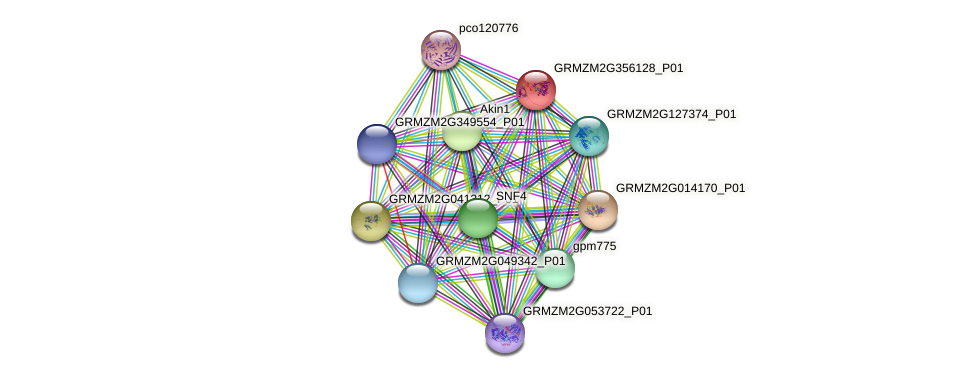 GRMZM2G356128_P01 protein (Zea mays) - STRING interaction network