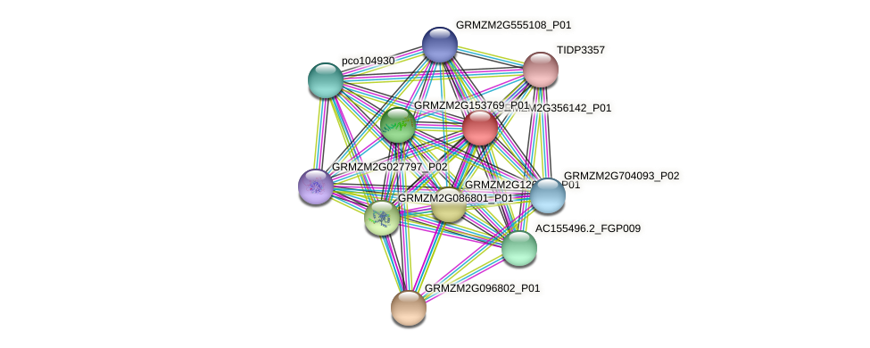 GRMZM2G356142_P01 protein (Zea mays) - STRING interaction network