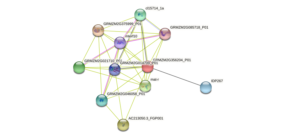 GRMZM2G356204_P01 protein (Zea mays) - STRING interaction network