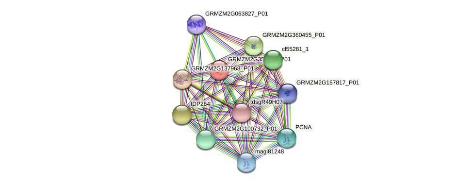GRMZM2G356523_P01 protein (Zea mays) - STRING interaction network