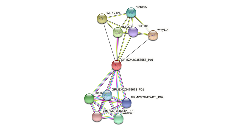 GRMZM2G356556_P01 protein (Zea mays) - STRING interaction network
