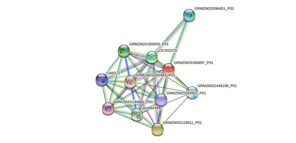 GRMZM2G356897_P01 protein (Zea mays) - STRING interaction network