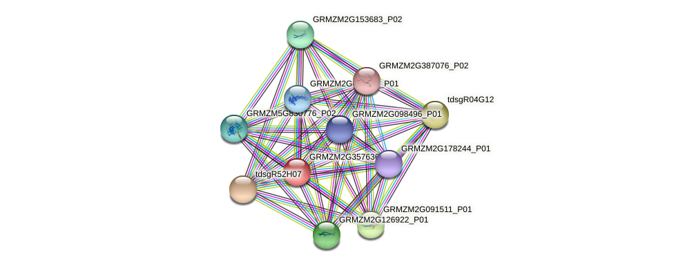GRMZM2G357636_P01 protein (Zea mays) - STRING interaction network