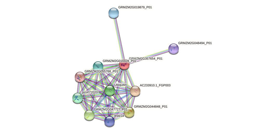 GRMZM2G357654_P01 protein (Zea mays) - STRING interaction network