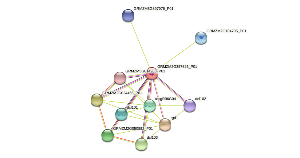 GRMZM2G357825_P01 protein (Zea mays) - STRING interaction network