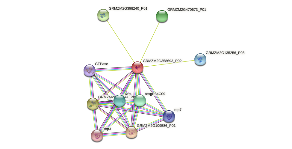 GRMZM2G358693_P02 protein (Zea mays) - STRING interaction network