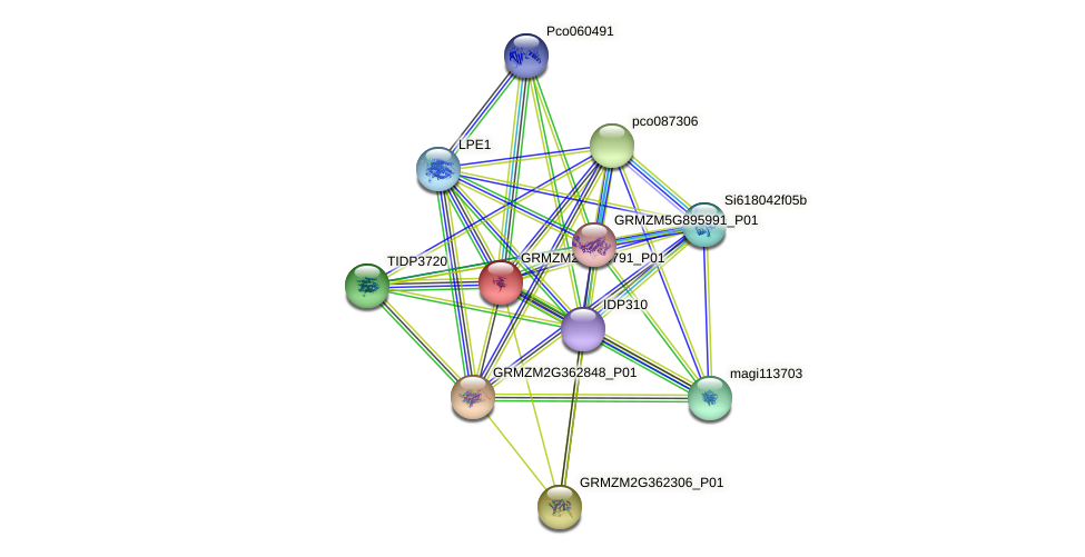 GRMZM2G358791_P01 protein (Zea mays) - STRING interaction network