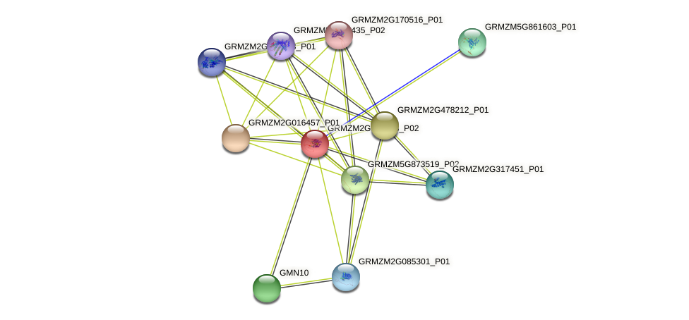 GRMZM2G359038_P02 protein (Zea mays) - STRING interaction network