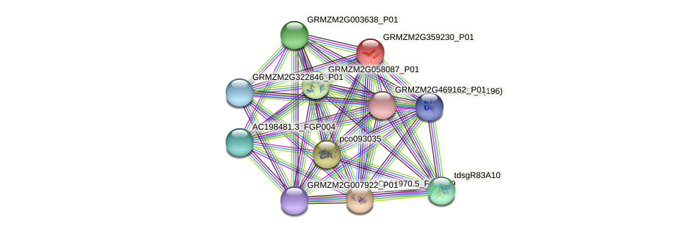 GRMZM2G359230_P01 protein (Zea mays) - STRING interaction network