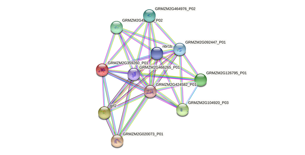 GRMZM2G359260_P01 protein (Zea mays) - STRING interaction network
