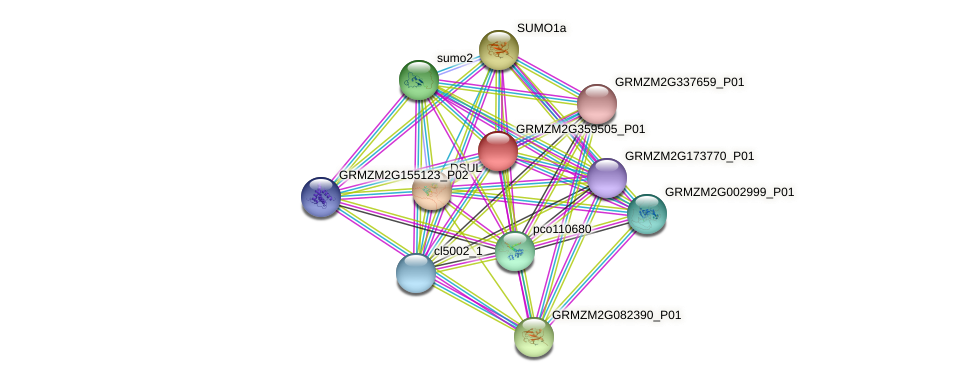 GRMZM2G359505_P01 protein (Zea mays) - STRING interaction network