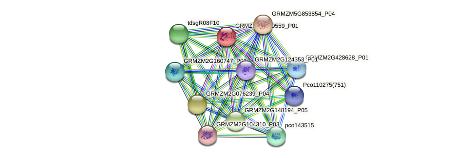 GRMZM2G359559_P01 protein (Zea mays) - STRING interaction network