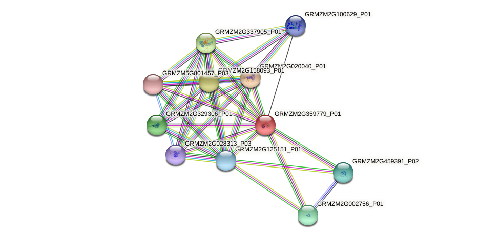 GRMZM2G359779_P01 protein (Zea mays) - STRING interaction network