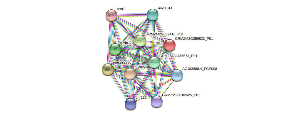 GRMZM2G359822_P01 protein (Zea mays) - STRING interaction network