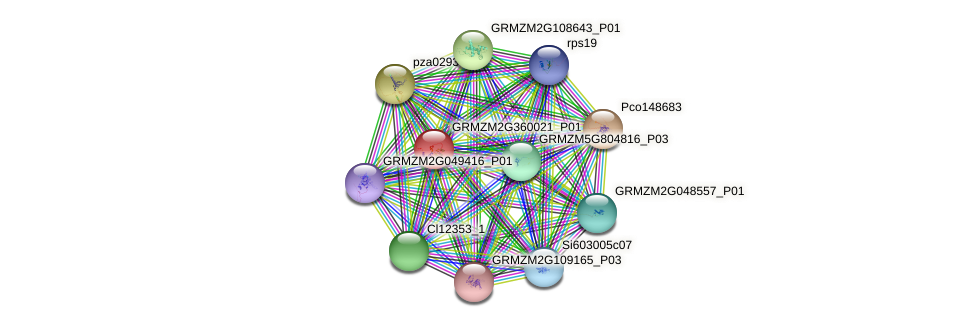 GRMZM2G360021_P01 protein (Zea mays) - STRING interaction network