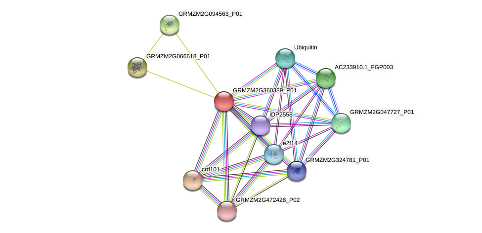 103653787 protein (Zea mays) - STRING interaction network