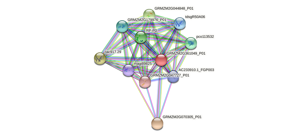 GRMZM2G361049_P01 protein (Zea mays) - STRING interaction network